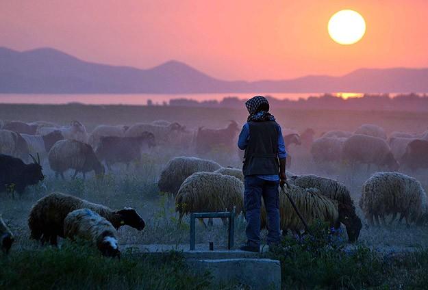 Çobanlara mesleki kariyer